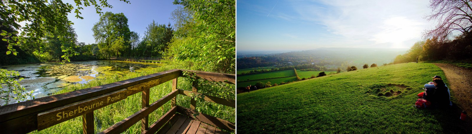 Top 5 picnic spots in Surrey