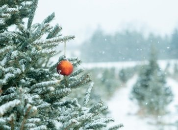 Top 4 Christmas tree suppliers in Surrey